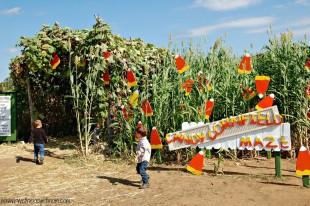 Sweet Berry Farm in Fall ~ Marble Falls, TX