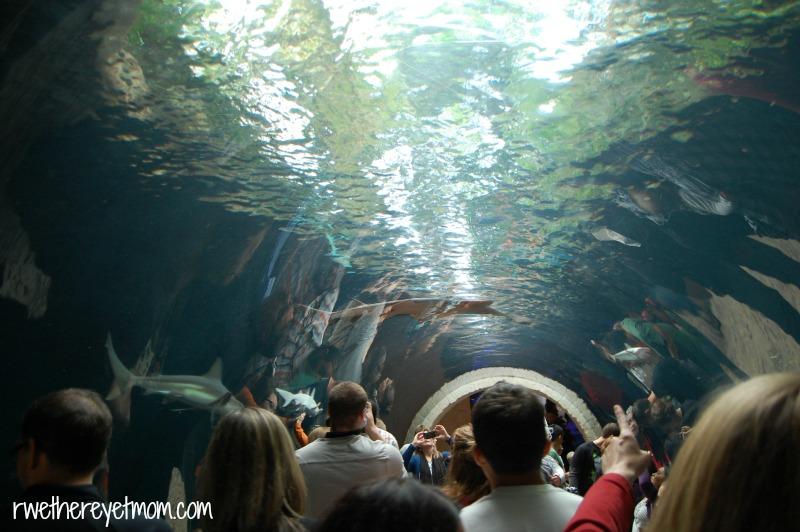 Dallas World Aquarium ~ Dallas, TX - R We There Yet Mom?