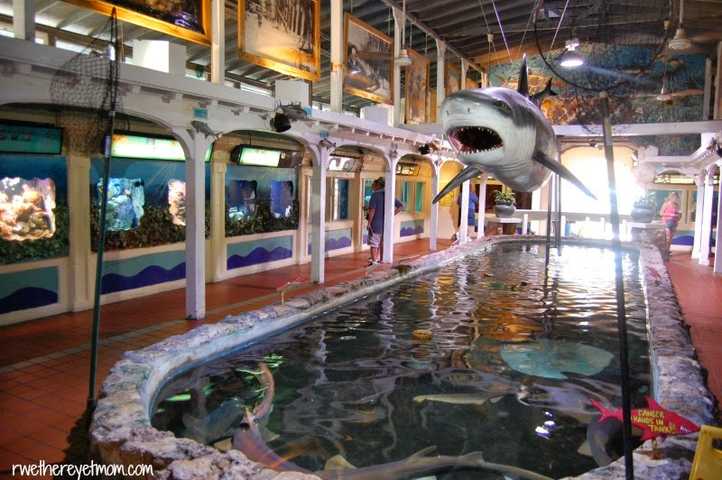 5 Fun Things To Do In Key West Florida R We There Yet Mom