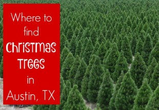 Where to Find a Live Christmas Tree in Austin/Central Texas: 2015