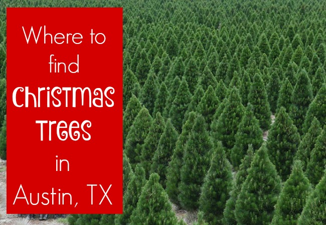 Christmas Trees in Austin, TX