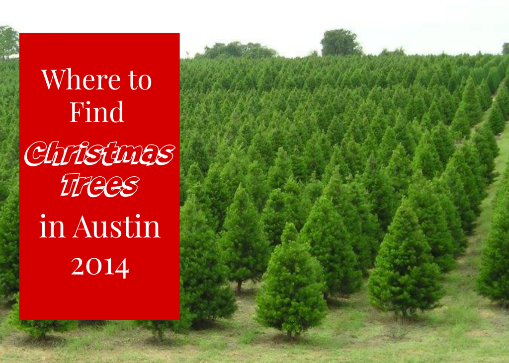 Where To Find A Live Christmas Tree Austin Texas 2014