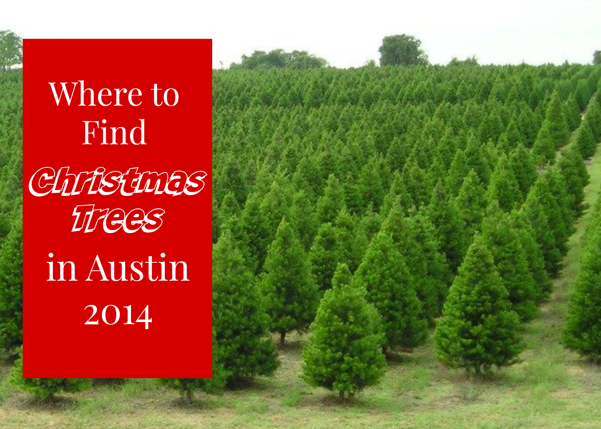 Where To Find A Live Christmas Tree