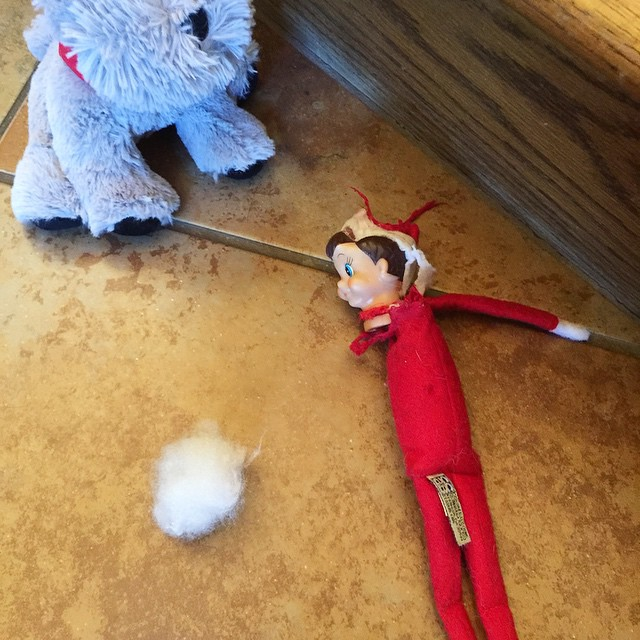 Uh oh. I guess Jake (our German Shepherd) didn't really like George. #elfontheshelf #elf #georgetheelf