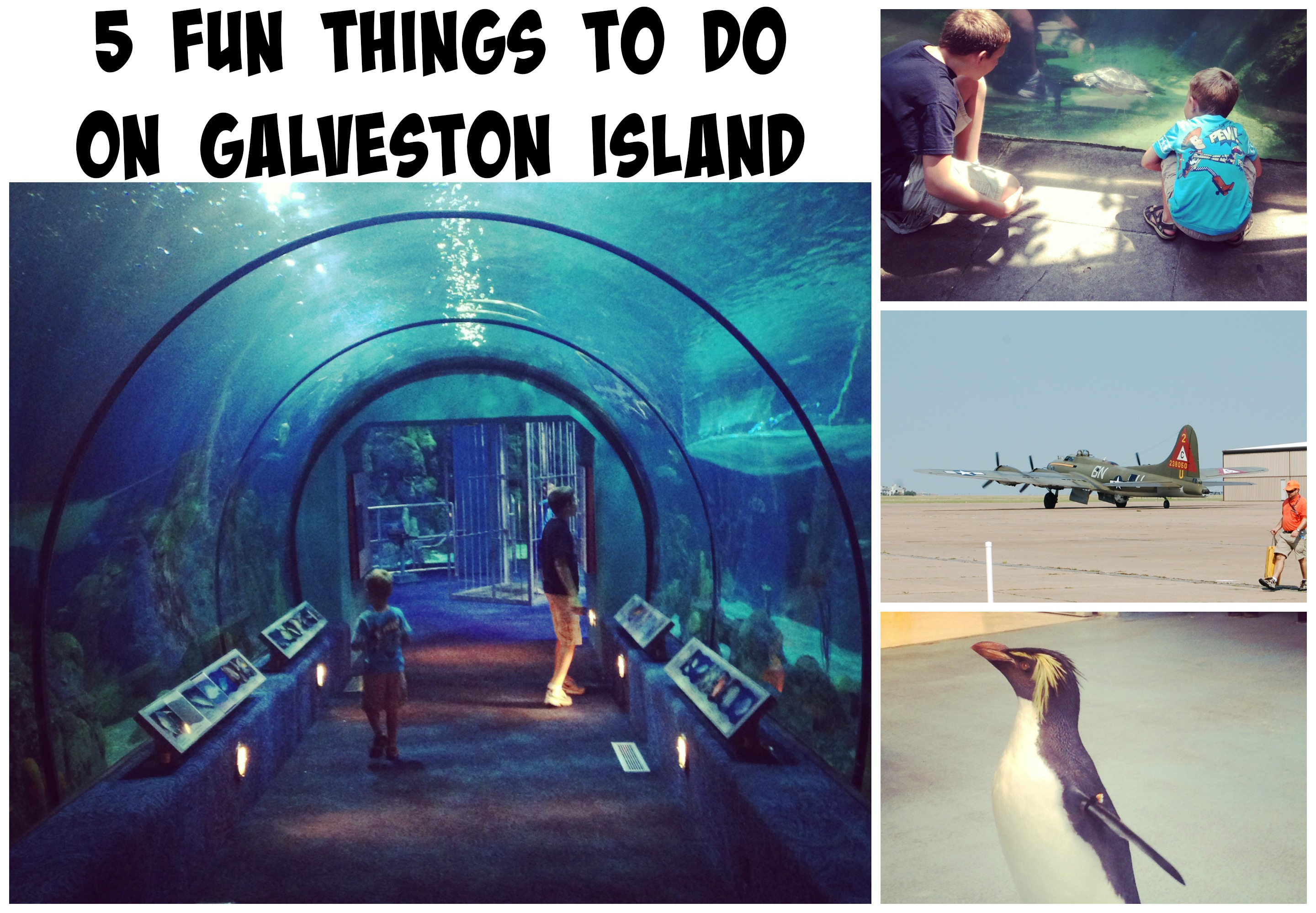 Fun Things To Do On Galveston Island