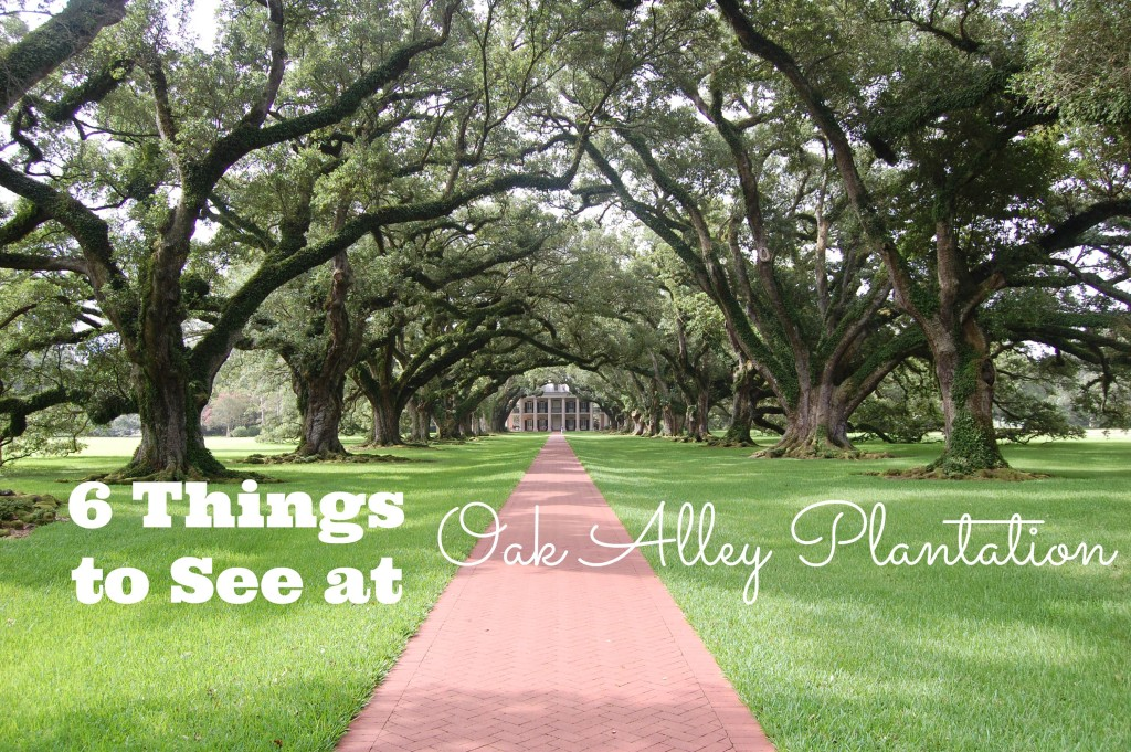 6 Things to See at Oak Alley