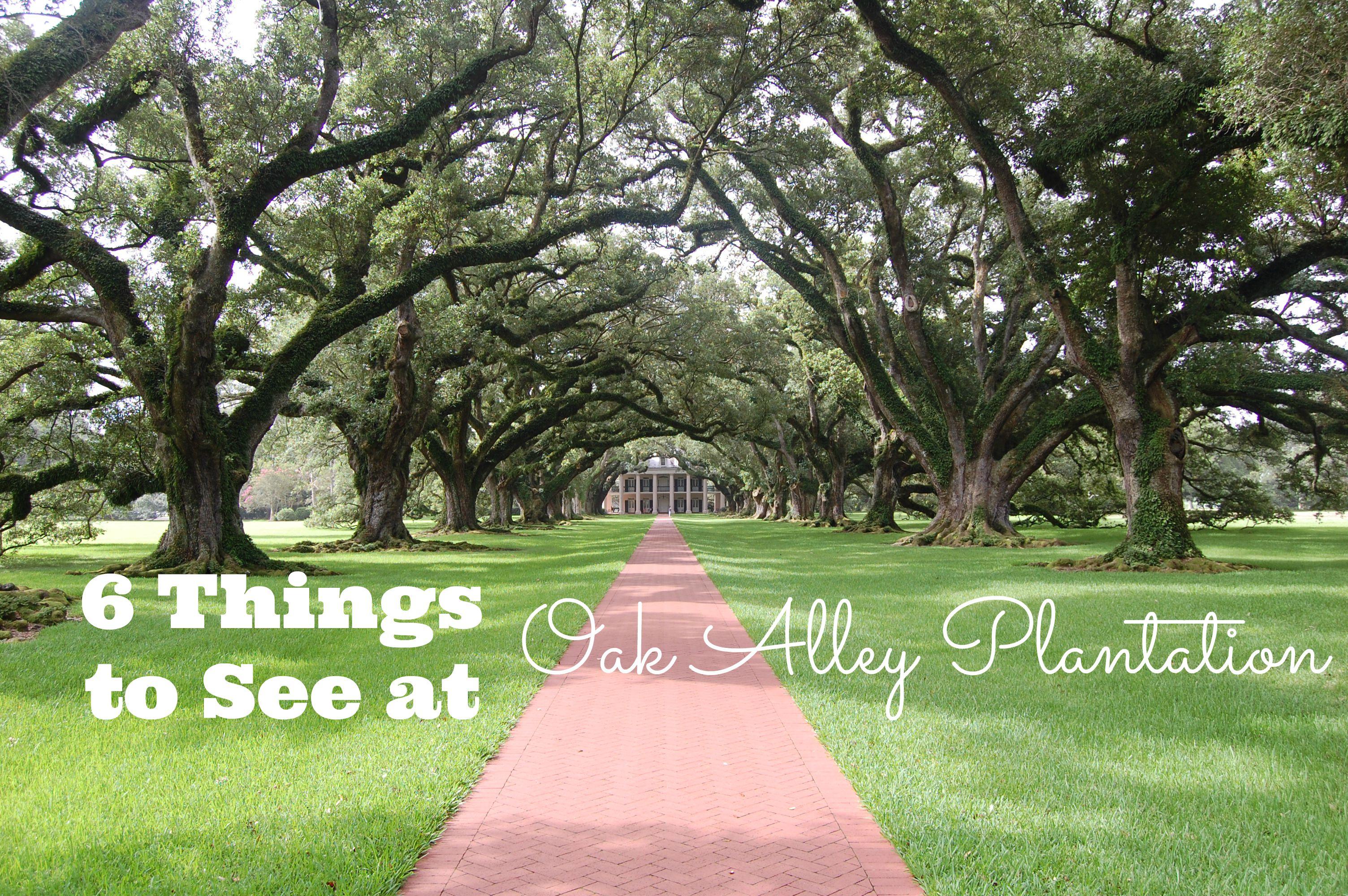 6 Things to See at Oak Alley Plantation | Plantation near ...