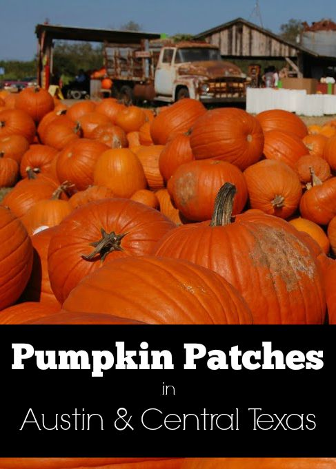 Pumpkin Patches in Austin & Central Texas