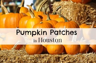 Houston Pumpkin Patches | 2016