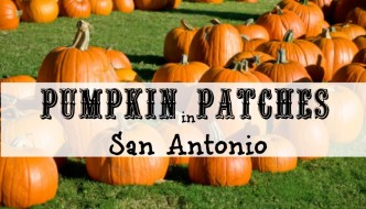 Pumpkin Patches in San Antonio, TX | 2016
