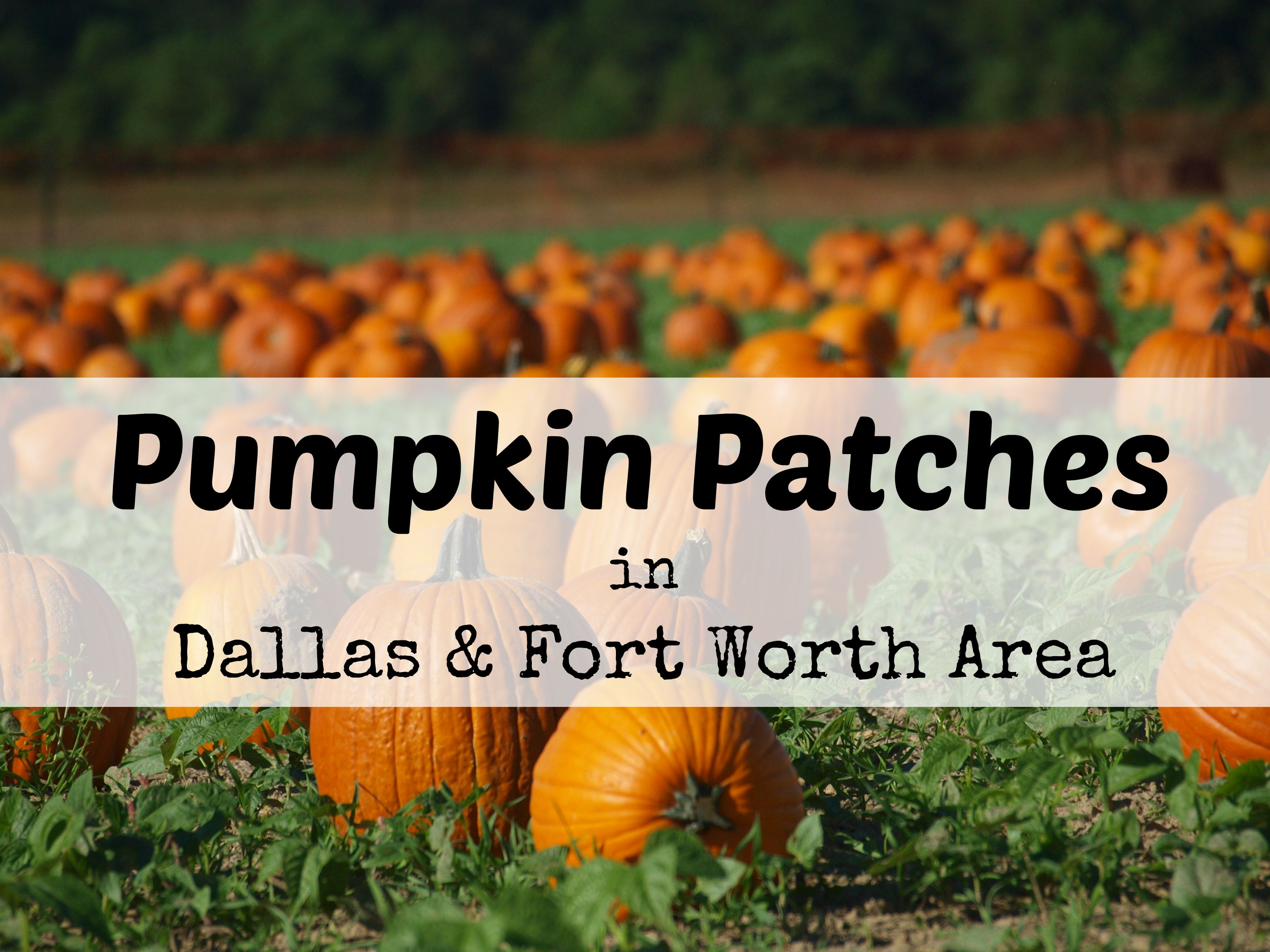 8 pumpkin patches to visit in north texas.