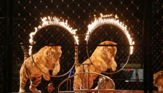 Ben Hur Shrine Circus at Cedar Park Center: January 13-16, 2017