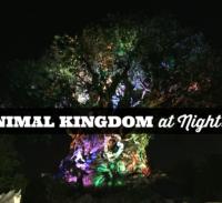 Animal Kingdom At Night 2