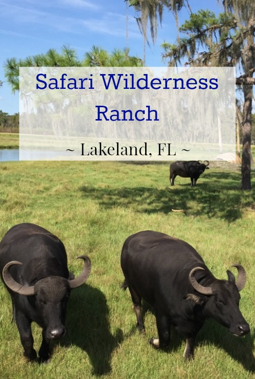 safari-wilderness-ranch