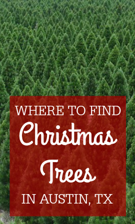 Where To Find A Live Christmas Tree in Austin, TX
