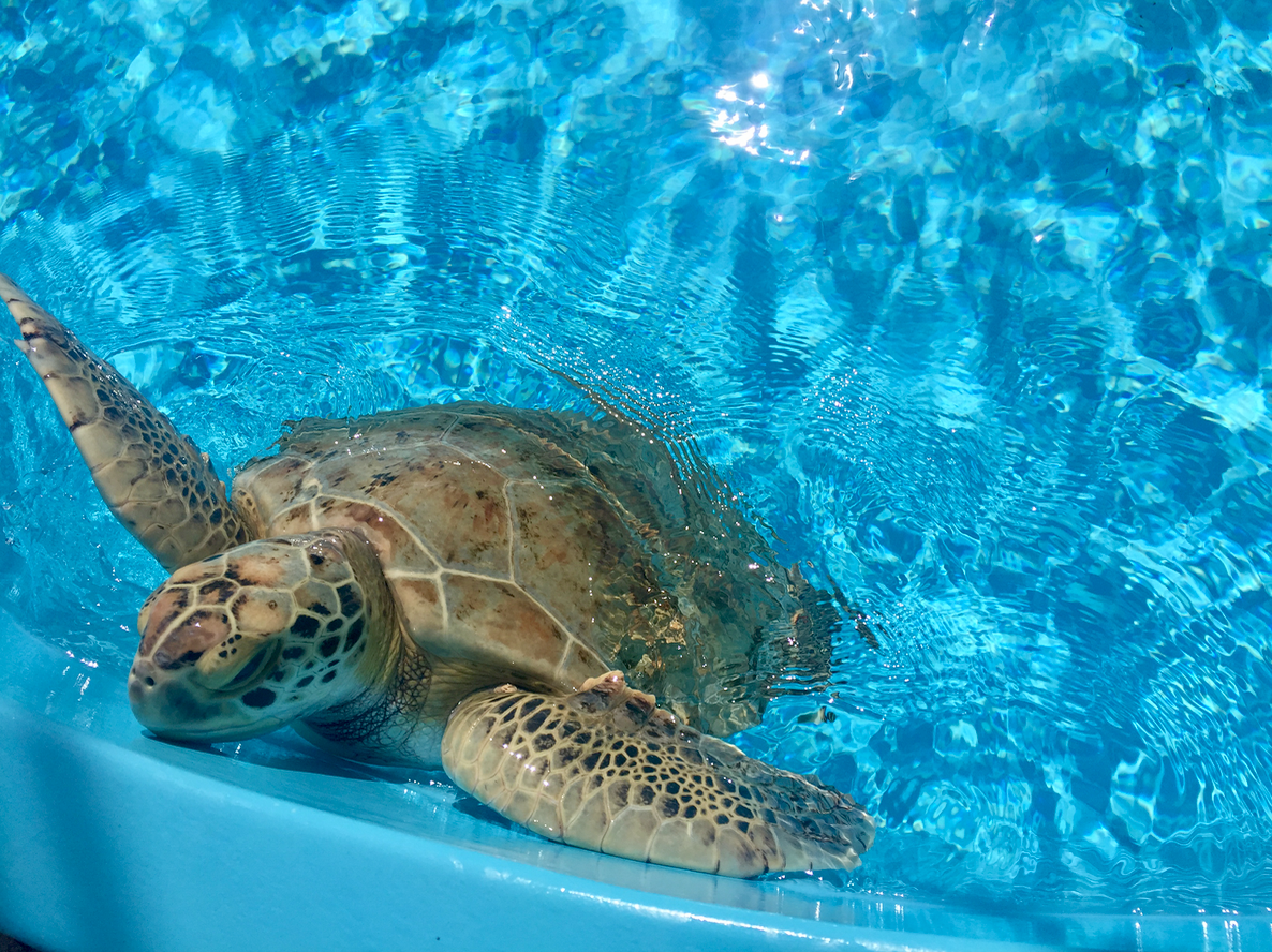 Loggerhead Marinelife Center in The Palm Beaches Florida