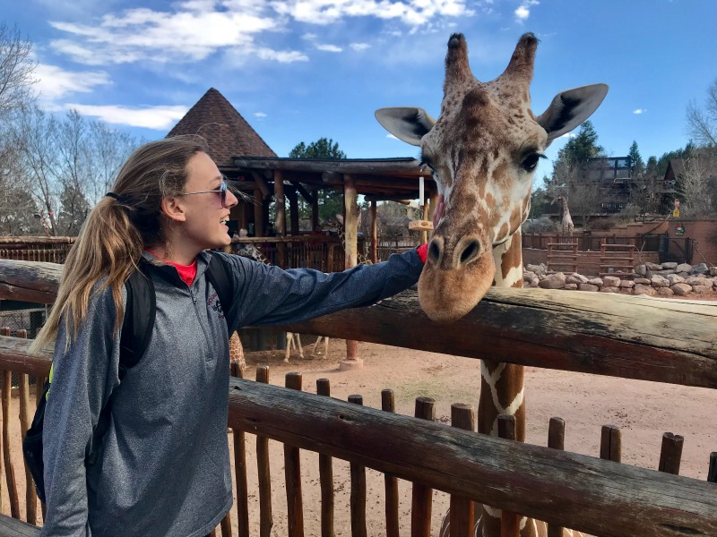 Colorado Springs with Kids: Cheyenne Mountain Zoo