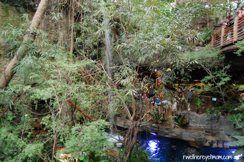 Things to do in Dallas: rainforest-aquarium