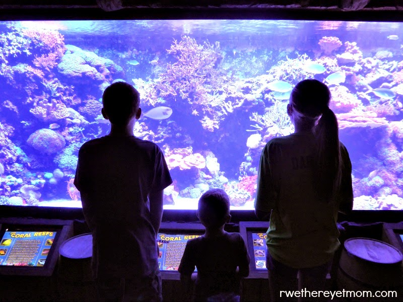 Houston with Kids: Houston Aquarium