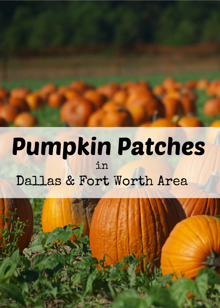 Pumpkin Patches in Dallas & Fort Worth DFW area