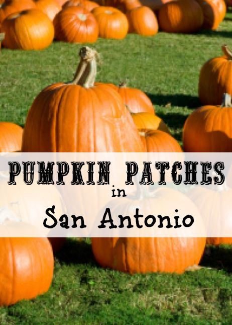Pumpkin Patches in San Antonio